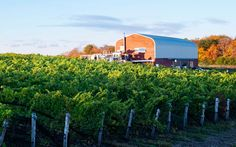 Best Places to Travel in 2015 | Travel + Leisure  Prince Edward County, Canada with 40+ Wineries