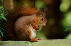Frightened Squirrel