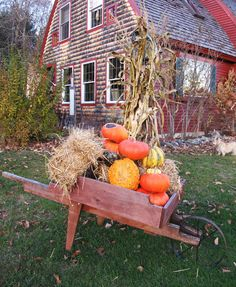 Prim Harvest Thyme...