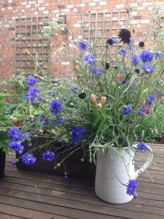 Jug full of blue cornflower with black Scabious. July 17th 2014. Rescued from the cut flower patch that the puppies flattened!