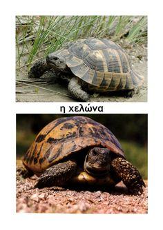 ζώα σε χειμερία νάρκη Turtle, Winter, Animals, Winter Time, Turtles, Animales, Animaux, Tortoise, Animal