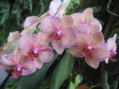 from the orchid display at Longwood Gardens