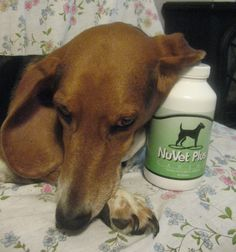 I know , still NOT a bulldog -  This is my girl Lucy --- She is a loud mouth too!   She loves her NuVET Plus wafers  http://bulldogvitamins.blogspot.com/2011/02/my-itchy-dog-kit-its-guaranteed-to-work.html