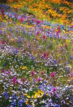 A field of flowers for all those affected by the recent tragedy at the 2013 Boston Marathon......:(....they're really beautiful flowers though....;)