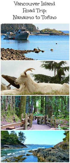 Traveling from Nanaimo to Tofino? Here are the top things to see and do while on route. An extensive road trip from Nanaimo to Tofino, showcasing the top things to see and do while on route! Vancouver Island, Vancouver Travel, Voyage Canada, West Coast Road Trip, Canadian Travel, Canadian Rockies, Wanderlust, Philippines Travel, National Parks