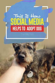How Social Media Hel How Social Media Helps To Adopt Dogs