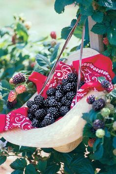 Plump, freshly picked berries warmed by the summer sun melt in your mouth, tickle your taste buds, and temporarily turn your tongue purple.