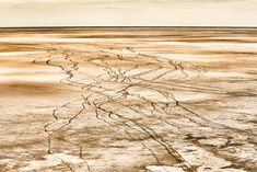 Natural aerial abstract wall art image of wildebeest tracks crossing a dry pan in Botswana Abstract Images, Abstract Wall Art, Art Images, Natural Phenomena, Wildlife Art, Fine Art Paper, Fine Art Prints, Canvas Art, African