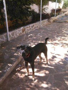 Βρέθηκε το σκυλάκι της φωτογραφίας στην Λούτσα. Το αναγνωρίζει κανείς?