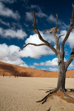 Been to the Namib Desert... the oldest desert in the world... I'd go back in a heartbeat.