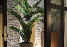 Un'attenta progettazione per una camera strutturata attorno ad un suggestivo giardino pensile. La cura nella scelta dei materiali e il corretto bilanciamento degli elementi danno vita ad uno spazio di quiete nel cuore storico di Bologna, creando un'atmosfera zen, adatta al riposo e alla contemplazione. Bologna, Cactus Plants, Cacti, Cactus
