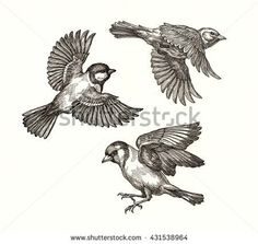 Titmouse Flying Stock Photos Royalty Free Images Vectors