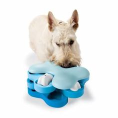 This site is full of toys for your smart dog needing to keep his mind occupied!
