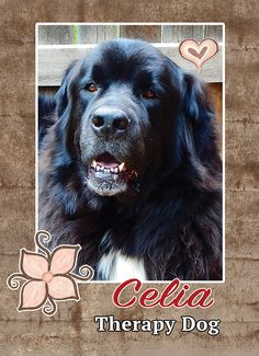 Celia Therapy dog #trading cards