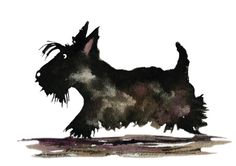 Scottish Terrier Dog , printed on Fine quality photographic ink-jet Satin paper ,Photo Satin 300gsm. This luxury heavyweight photo paper with a