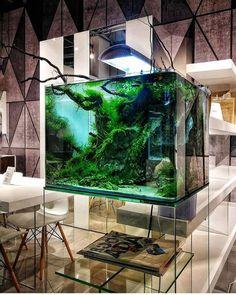 Wow! Love it 😳💚 by @alex_kirghizov . . . . . . . . . . . . . . . . .… Aquarium Design, Aquarium Setup, Home Aquarium, Nature Aquarium, Aquarium Decorations, Reef Aquarium, Aquarium Craft, Wall Aquarium, Aquarium Stand
