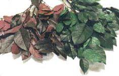 4. Glicerina  El método de la glicerina consiste en reemplazar el agua que contienen las plantas por glicerina. El material queda flexible, no rígido y frágil como el secado tradicional.  Se puede aplicar a flores, pero quedan oscurecidas o satinadas y por lo tanto, este método se recomienda para hojas o ramas, como vemos en las siguientes fotografías.