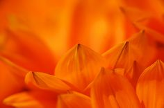orange (Thanks so much for Explore! 2013-08-09)