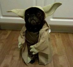 pets dressed up as their favorite movie character