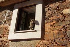 Schist Village   Aldeia do Xisto Barroca Portugal, Portuguese, Windows, Doors, Cats, Paisajes, Baroque, Gatos, Kitty Cats