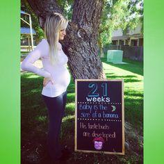 21 week board!