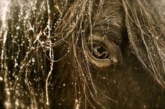 """"""" Everything I know about the horse, I learned from the horse."""" ~ Tom Dorrance"""