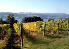 Tasmania. Really like Pirie's Pinot Noir.