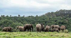 Knysna Elephant Park, South Africa