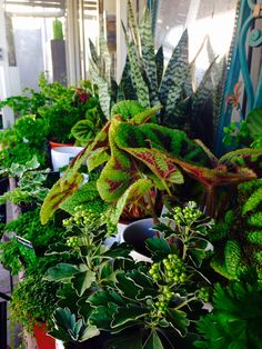 Our range of indoor plants available at the moment.