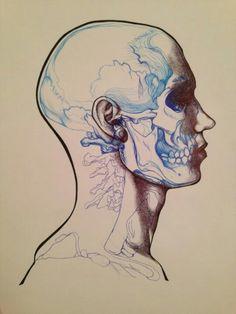 blue lines skull