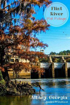 62 Best Albany, Georgia images in 2015   Albany georgia, Georgia on