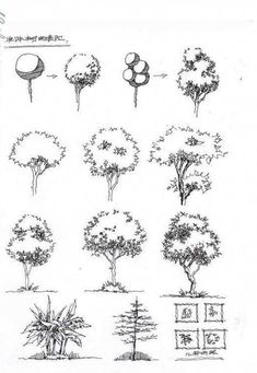 31 Tree Types Pencil Drawing Ideas - Art Tree Pencil Sketch, Pencil Drawings, Drawing Ideas, Type, Ideas For Drawing, Pencil Art