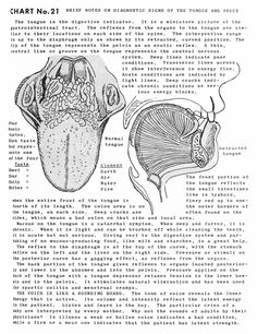 Nerve Anatomy, Dna Art, Human Body Facts, Accupuncture, Body Therapy, Medical Anatomy, Herbal Magic, Chinese Medicine, Holistic Healing