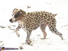 Leopard Dog - Homemade costumes for pets