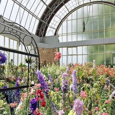 The prettiest summer flowers in full bloom at the #wintergardens #newzealand #madefromscratch