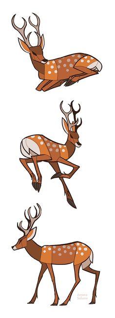 Studies - Deer by oxboxer on DeviantArt