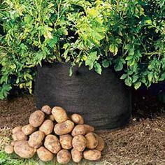 Potato Bin - Grow Your Own Potatoes - No Garden Required!