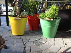 Twitter / Recent images by @RedDaffodil - Buckets of Love (& herbs) at