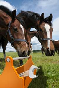 Business Resource for Professional Equestrians