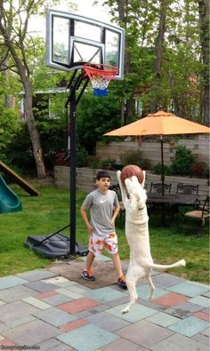 Humorous pooch playing basketball!