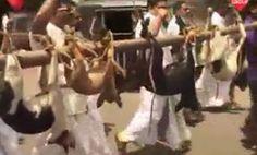 """""""O Grito do Bicho"""": Indianos matam seus animais e levam eles para mani..."""
