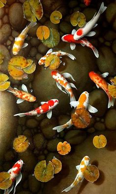 Could this pond be in a Milpitas public park? Flower Background Wallpaper, Fish Wallpaper, Flower Backgrounds, Koi Painting, Pebble Painting, Fish Chart, Koi Fish Drawing, Dali Paintings, Koi Art