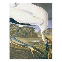 vintage American Stork by John James Audubon Postcard ; diy n cyo