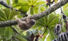 Groupon - 7-Day Costa Rica Tour for Two from Ecoterra. Priced from $ 599.50 Per Person. in San Jose, Tortuguero, La Fortuna. Groupon deal price: $1,199