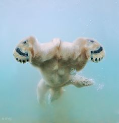 Polar Bear swimming - Let's face it we all have our bad angles