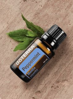 Sealed Peppermint Essential oil by DoterrA! DoterrA Other Peppermint Essential Oil Uses, Doterra Peppermint, Peppermint Oil, Peppermint Plants, Peppermint Leaves, Carrier Oils, Doterra Essential Oils, Diffuser Blends, Coconut Oil