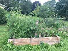 Gardening with a 'Black Thumb' – Feats of Real Eats Aquarium, Gardening, Plants, Black, Black People, Lawn And Garden, Plant, Aquarius, Fish Tank
