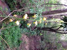 We are finding more and more flower species as 2015 begins