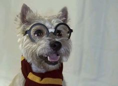 It's Hairy Potter as dogs play dress-up – The Sun