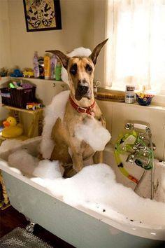 Yep I feel silly! #rescuedog #dog #itsarescuedoglife